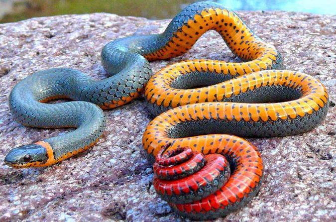 год металлической совместимость овен в змеи родившиеся