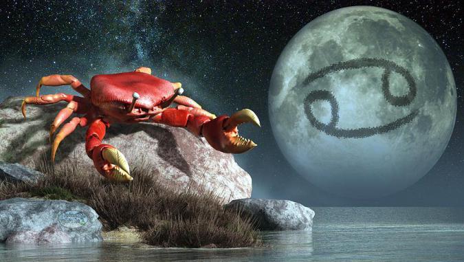 Что же Петушок готовит для водных знаков Зодиака? Компания «Столичные поставки» расскажет вам об этом!