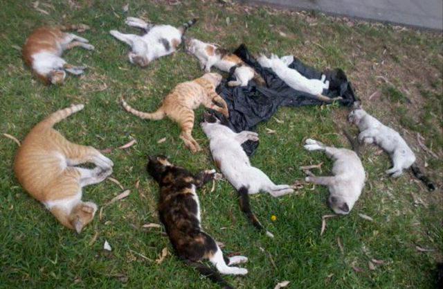 Если приснилось что убила кота