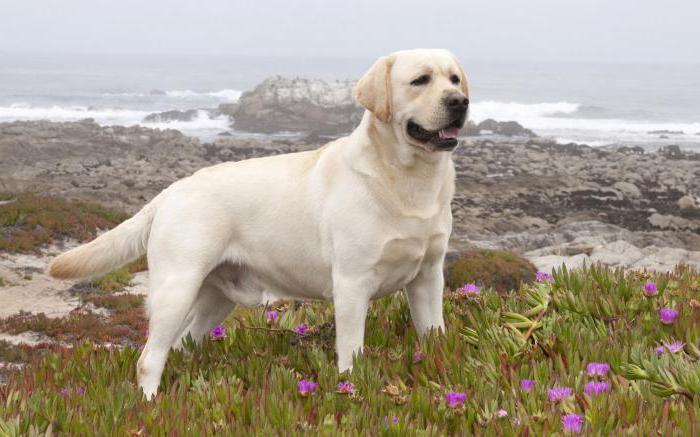 Сонник белая собака нападает фото