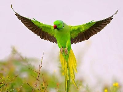 снятся чему папугаи к