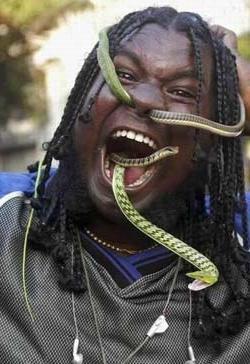 К чему снятся змеи по соннику миллера