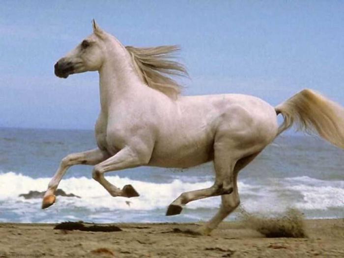 К Чему Снятся Коня