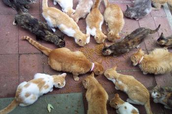 К чему снятся много кошек для девушки