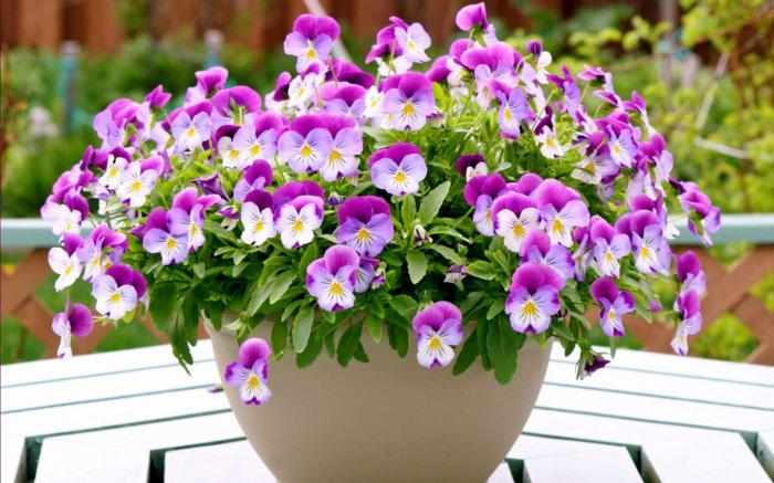 Сон цветы в горшках цветут