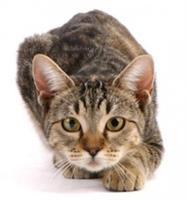во сне кошка нападает этих ситуациях